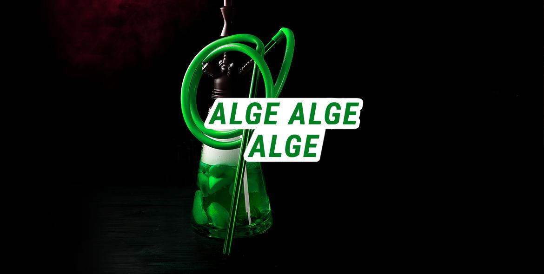 alge-in-shisha-bowl